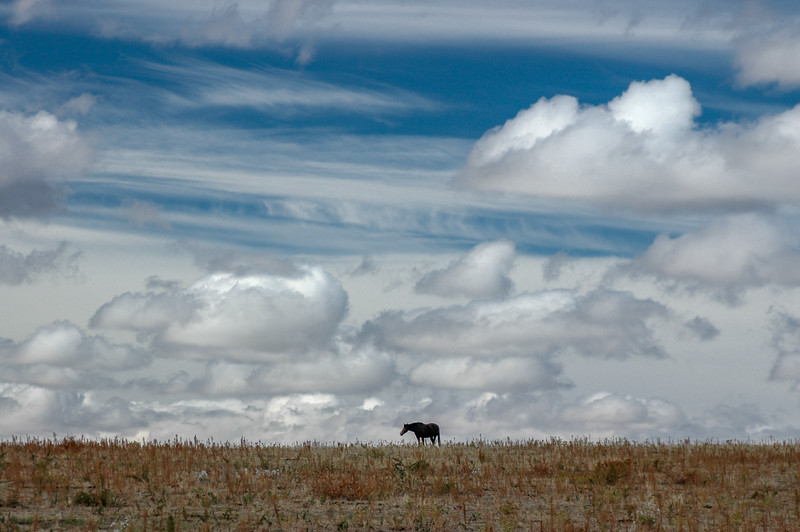 Wild Horse Under Big Sky #2