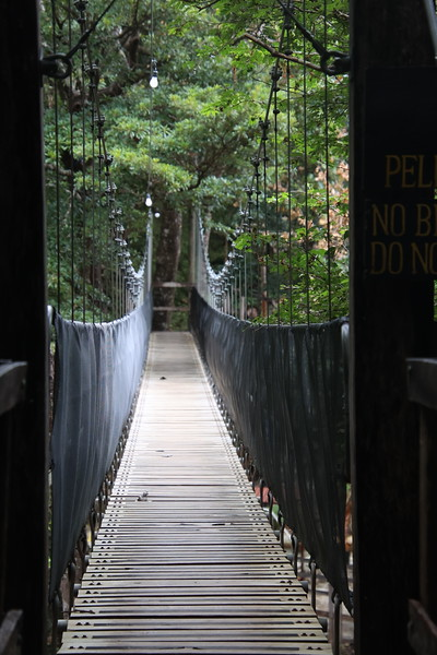 Tropical Costa Rica Hanging Bridges