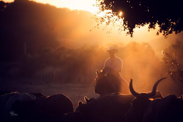 Mang Ranch Shoot