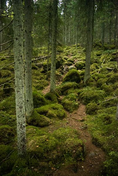 Woods_Finland-1.jpg