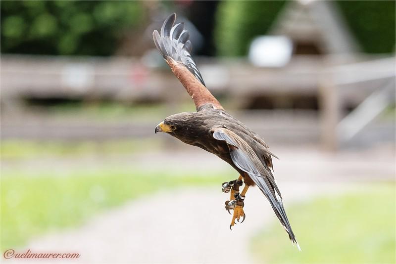 2016-06-29 Vogelpark Steinen -0U5A3201.jpg
