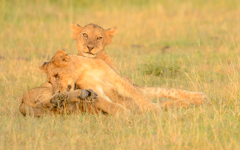 20160215__KET7183_Serengeti_Day_7.jpg