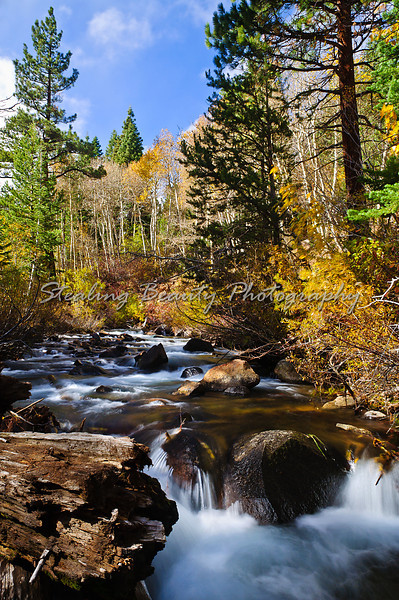 Sierra fall