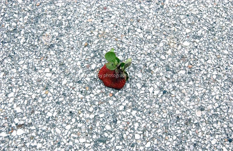 015-dead_strawberry-wdsm-29mar07-0634.jpg