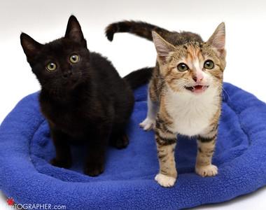 Toni's Kitty Rescue 2014