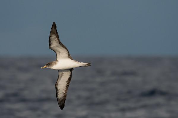 Pubnico pelagic August 2017