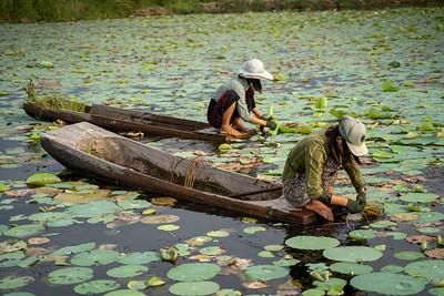Dry Zon, Mandalay region