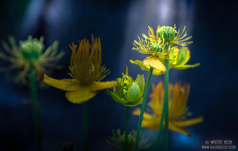 Flowers in Light - Photography by Wayne Heim
