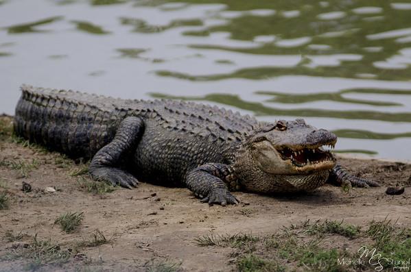 Alligator Alley 4.28.13
