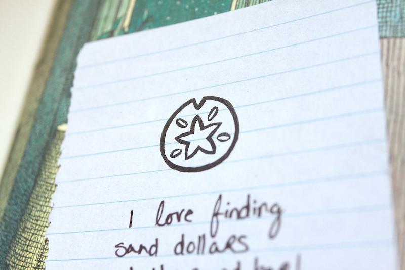 Sand Dollar 3.JPG