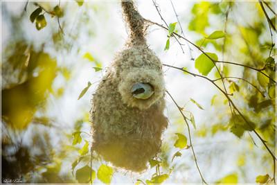 Fauna/Linnud ja loomad