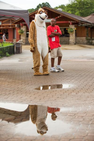 7.10 Zoo Friends