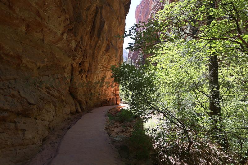 Path down refrigerator cyn.jpg