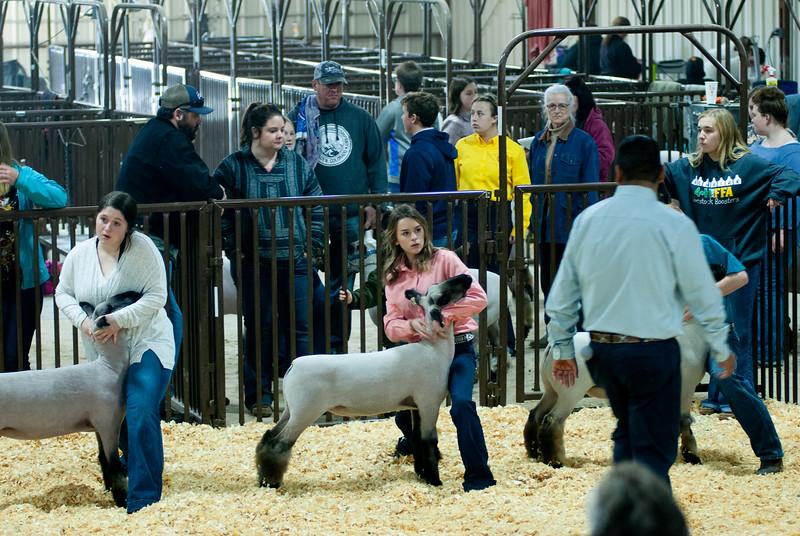 kay_county_showdown_sheep_20191207-73.jpg