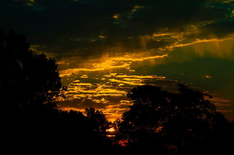 6.29.17 - Prairie Creek Recreation Area: Daybreak