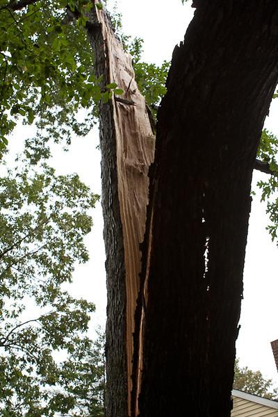 Hurricane Irene Fallen Tree