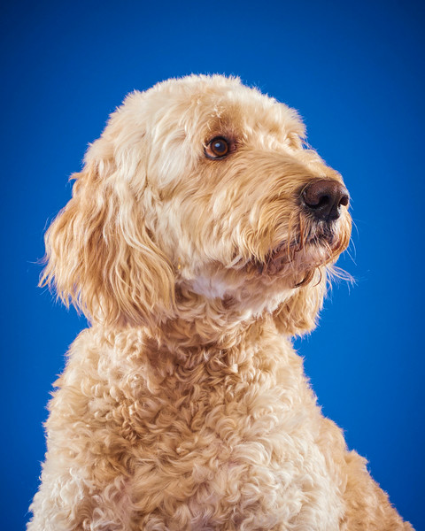 2016_12_24_Christmas Dogs4079 1.jpg
