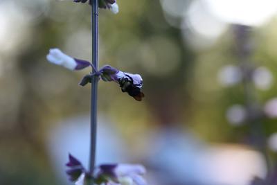Bee Macros 2012-07