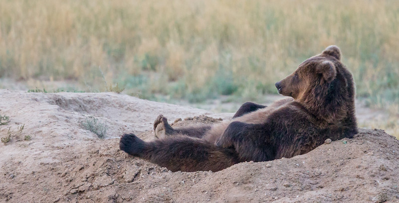 Just hanging out, Black Bear