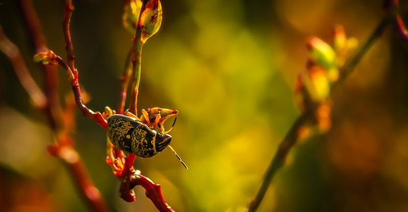 Bugs and Beetles - 135.jpg