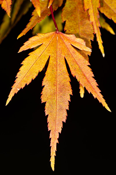 Fall Colors 2019