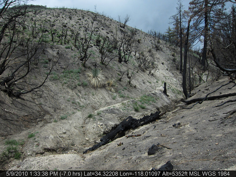 20100509151-Trail Recon, Silver Mocassin, West of Chilao.JPG