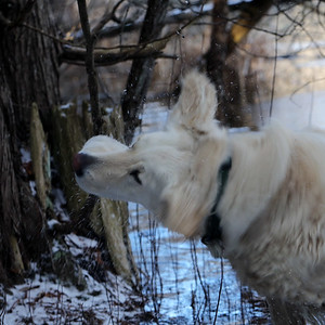 2017 02 Guelph Walks with Scout