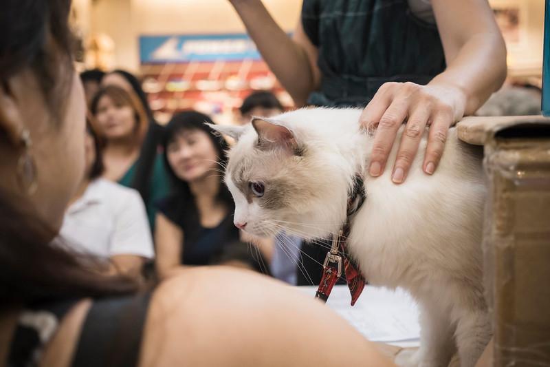VividSnaps-The-Seletar-Mall-CAT-Dress-Up-Contest-160.jpg