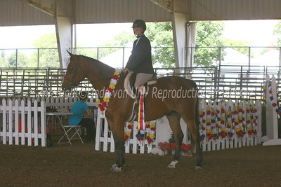 R13 Sport Horse Under Saddle