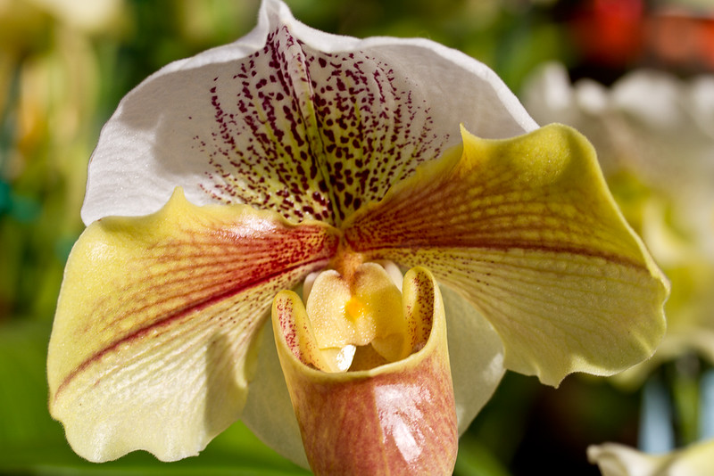 SF_Orchid_Show-39.jpg