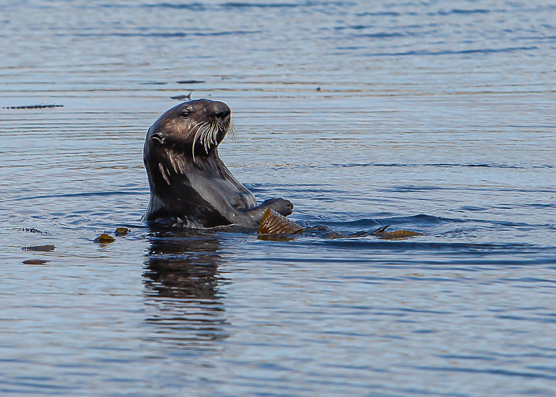 Morrow Bay Otters and AG Roosters-39.jpg