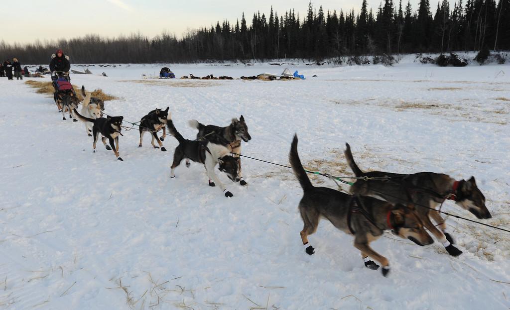 . Veteran Iditarod musher Kelley Griffin of Wasilla leaves the Athabaskan village of Nikolai, Alaska, on Tuesday, March 5, 2013.  (AP Photo/Bill Roth, Anchorage Daily News)