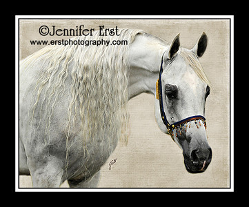 Equine Photography from 2005 - 2010