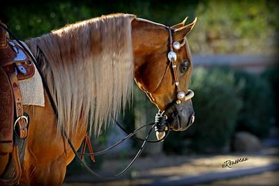 Bond Show Horses