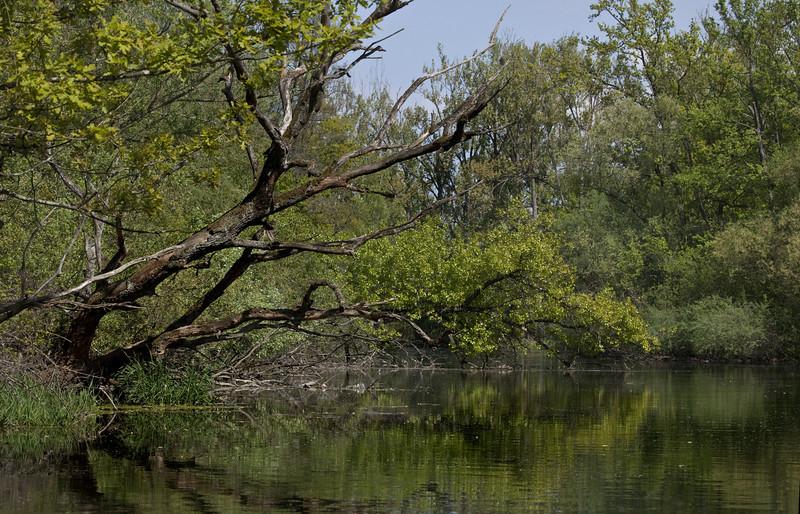 2011-apr-16_9487.jpg