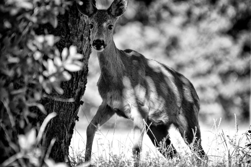 wildlifesweden (17).JPG