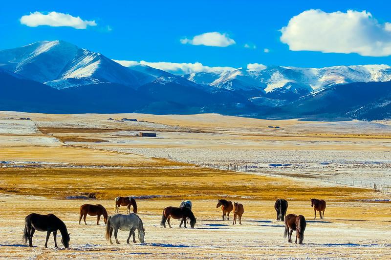 Animals-Horses-28.jpg