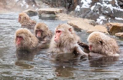 Snow Monkeys of Nagano, Japan