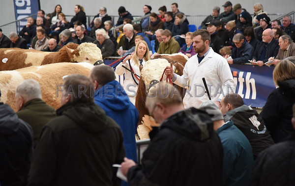 Stirling Bull sales Feb 18th-20th Feb 2018