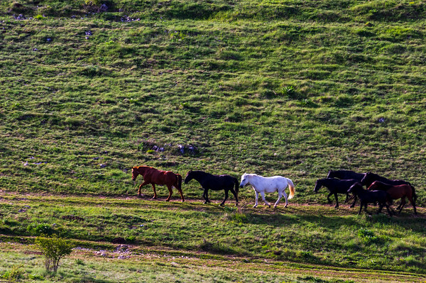 Wild horses in the Rhodope Mountains