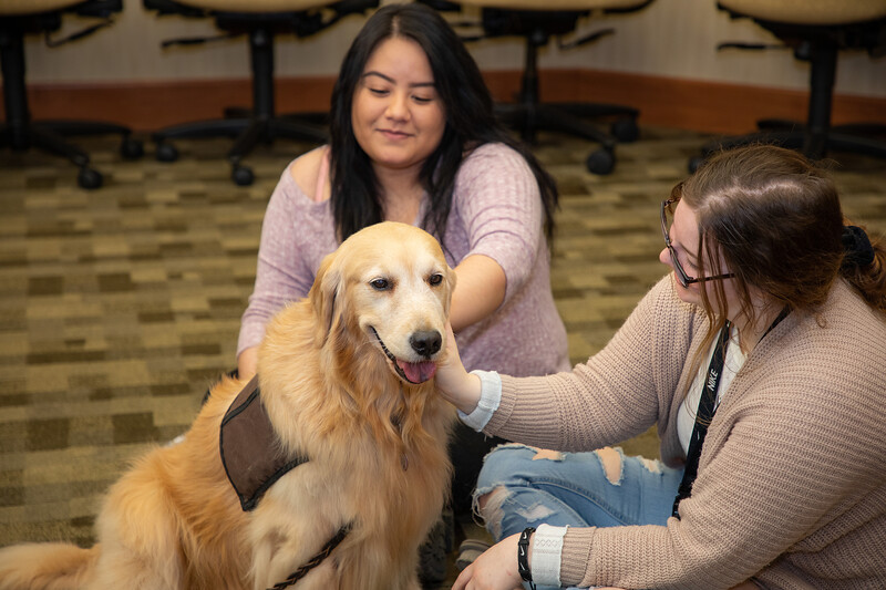 Therapy Dogs Sassy-7118.jpg