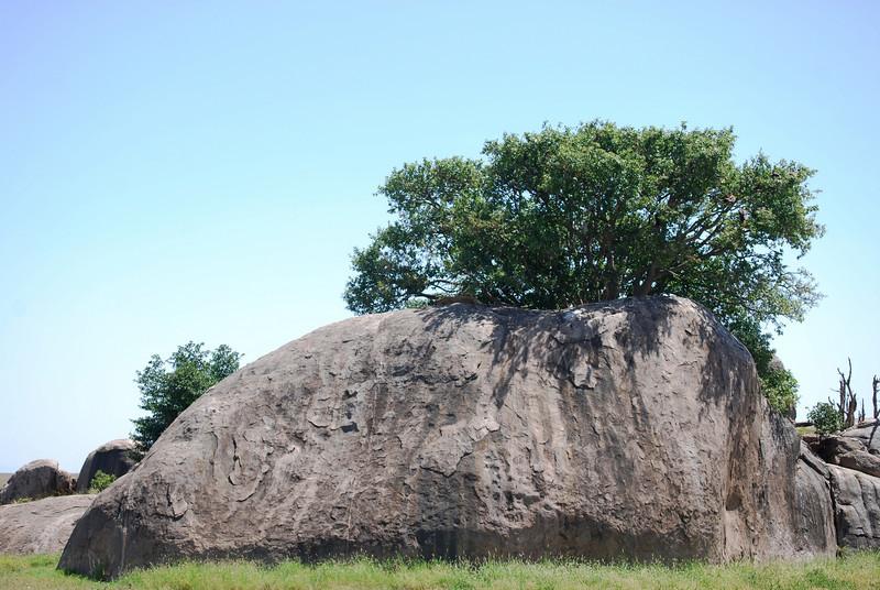 Serengeti (167).JPG