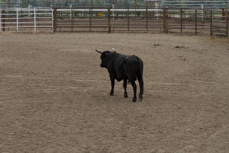2011_07_04 Wyoming 005.jpg