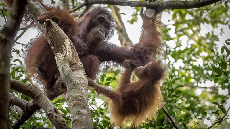 Borneo-2282.jpg