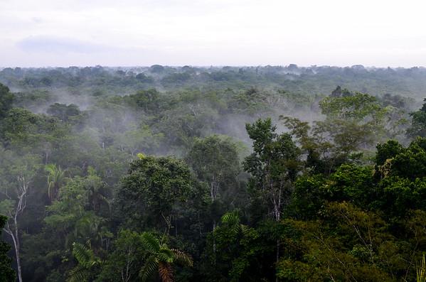 Amazon Basin Sacha Lodge - January 2017