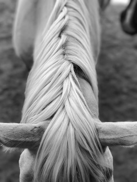 Dakota's mane  - black & white