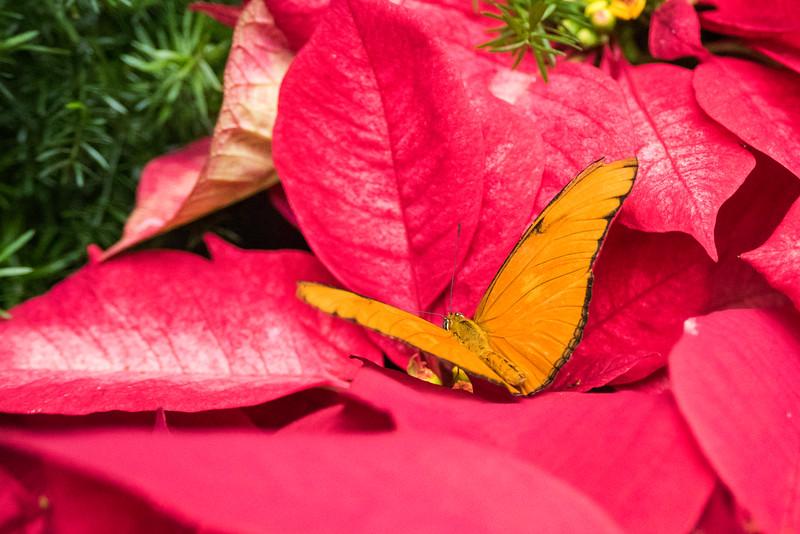 butterfly-203.jpg