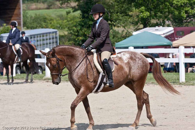 Wyoming County Roundup Hunt Seat Equitation SR