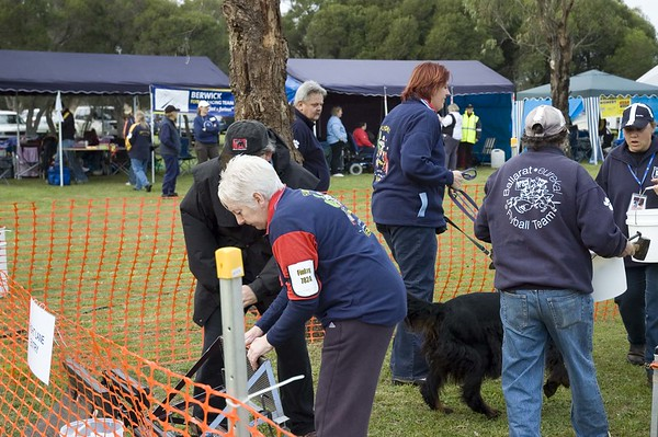 Flyball, Geelong, May 2006 (Part 1)