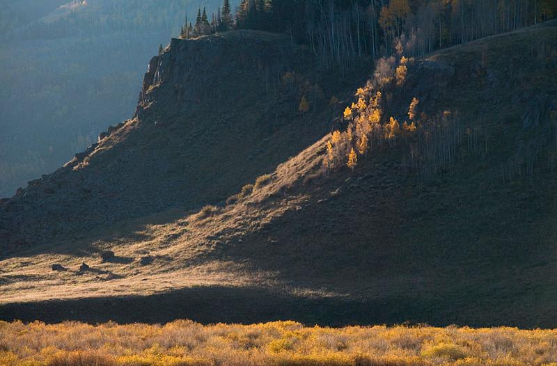 aspen-and-cliff.jpg
